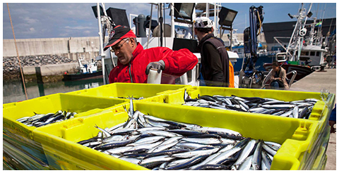 La Pesca Conservas Mingo